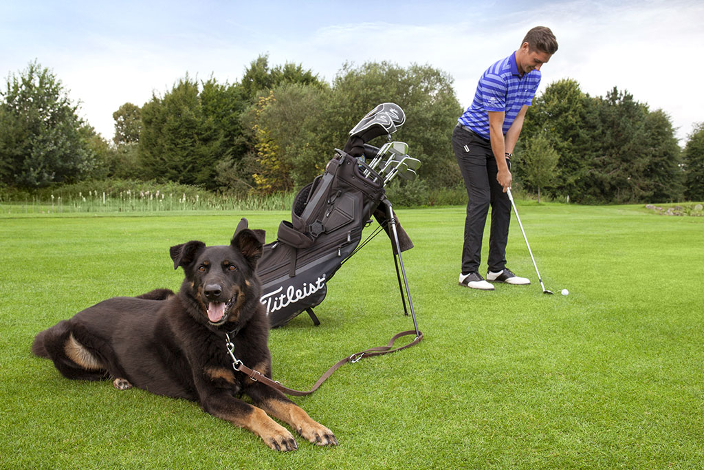 hunde-golf-club-verden